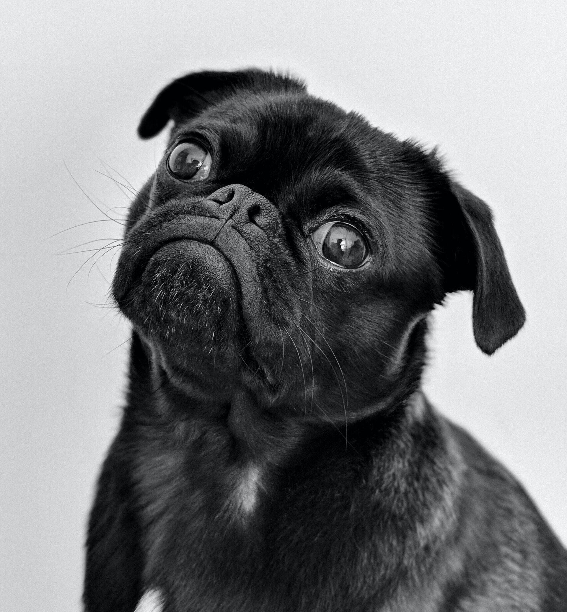 Vad din hund behöver